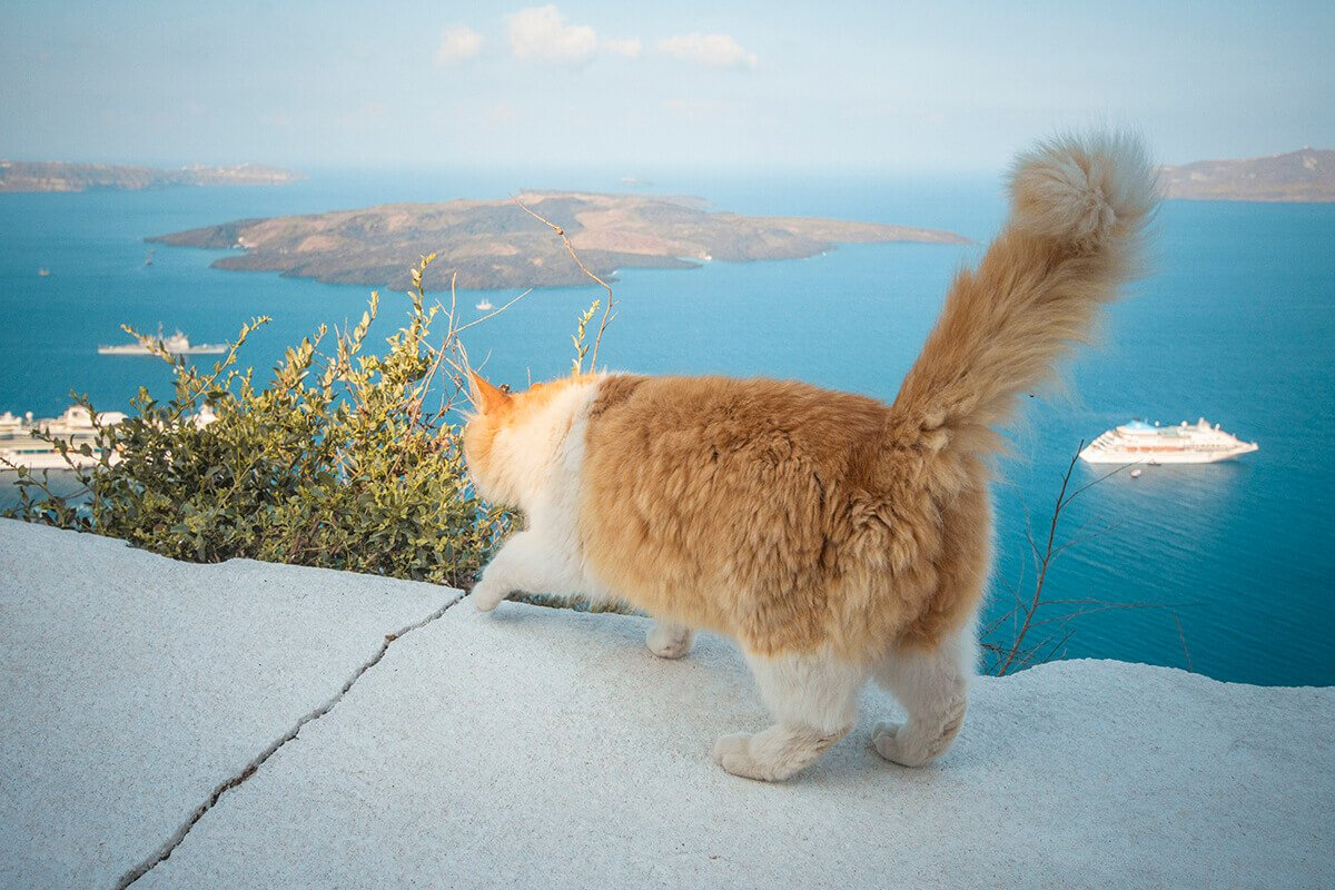 cat and cruiseships in santorini