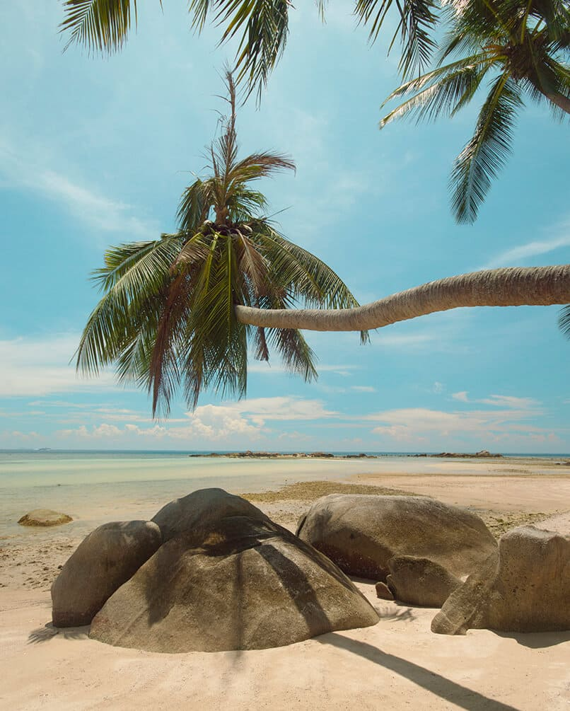 haad chao phao instagram photo location palm tree over rocks