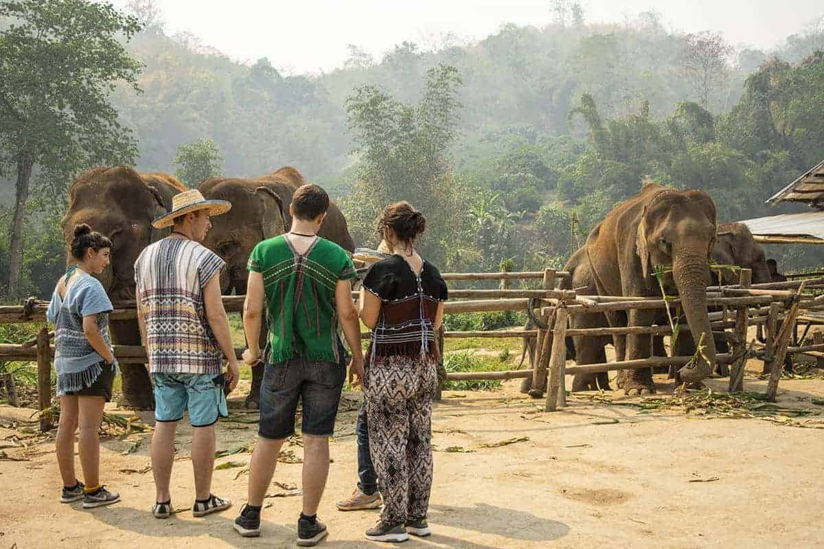 visiting elephant nature park during 3 days in chiang mai itinerary