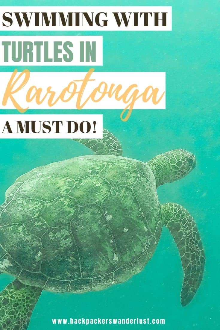 Find out all you need to know about swimming with turtles in Rarotonga on the Ariki Adventures turtle safari tour. I will be giving you all the information you need to know such as how to book, costs and what to expect.